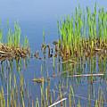 A Greening Marshland by Ann Horn