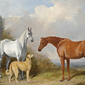 A Grey And A Chestnut Hunter With A Deerhound by William Barraud