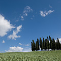 A Group Of Cypress Trees Dot A Tuscan by Joel Sartore