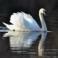 A Happy Swan by Jo-Ann  Matthews