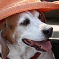 A Hat For Buddy by Bob Slitzan