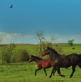 A Hawk And Horses In Kansas by Greg Rud
