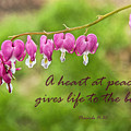 A Heart At Peace by David Arment