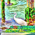 a heron is walking on a stair about the Grand Canal by Gina Koch