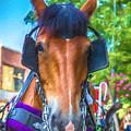 A Horse Of Course by John Haldane