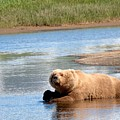 A Hot Day In The Hallo Bay Katmai National Park Preserve by OLena Art Brand