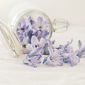 A Jar Of Purple Sweetness by Kim Hojnacki