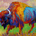 A Journey Still Unknown - Bison by Marion Rose