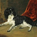 A King Charles Spaniel by MotionAge Designs