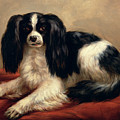 A King Charles Spaniel Seated On A Red Cushion by Eugene Joseph Verboeckhoven