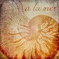 A La Mer Nautilus by Brandi Fitzgerald