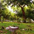 A Leaf by Atullya N Srivastava