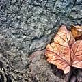 A Leaf's Bow by Scott Wendt Tom Wierciak