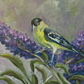 A Lesser Goldfinch by Susan  Spohn