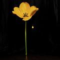 A Light In The Dark by Ludmila SHUMILOVA