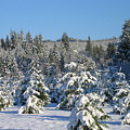 A Light Snow Dusting by Barb Morton