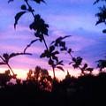 A Lighter Side Of A Sunset by Debra Lynch