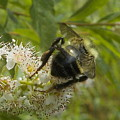 A Little Bee-hind by Lynn Sobecke