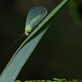 A Little Bug On A Grass Blade  by Jeff Swan