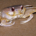 A Little Crabby by Trish Tritz