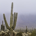 A Little Desert Fog  by Saija Lehtonen