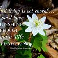 A Little Flower by Christine Peileke