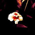 A Little Marigold by Debra Lynch
