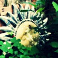 A Little Piece Of Sunshine In Ma's Garden by Lisa Victoria Proulx