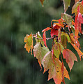 A Little Rain Must Fall by Terry DeLuco