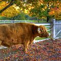 A Little Shaker Bull 2 by Sam Davis Johnson
