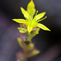 A Little Yellow Star  by Jeff Swan