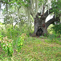 A Live Oak In Purgatory by Gary Richards