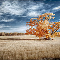 A Lone Tree by Dan Urban