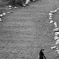 A Long Walk Home by Julian Regan
