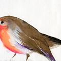 A Magical Little Robin Called Wisp by Nancy Moniz