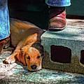 A Man And His Dog by Steve Harrington