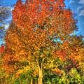 A Michigan Fall-2 by Robert Pearson