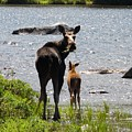 A Mom And Her Baby by Julie Houle