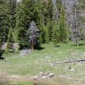 A Moose In The Rockies by Darla Wells
