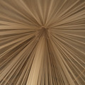 A Mosquito Net, Viewed From The Inside by Stephen Alvarez