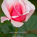 A Mother Is Like A Flower by Deb Buchanan
