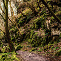 A Muddy Path by Nick Bywater