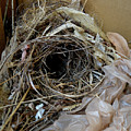 A Nest In A Box by To-Tam Gerwe