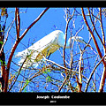 A  Nesting Egret by Joseph Coulombe