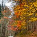 A Newport Autumn by Kerri Farley