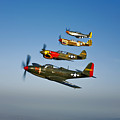 A P-36 Kingcobra, Two Curtiss P-40n by Scott Germain