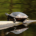 A Painted Reflection by Debbie Oppermann