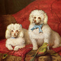 A Pair Of Poodles by English School