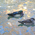 A Pair Of Wood Ducks by Robert Pearson