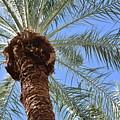 A Palm In The Sky by Jason Bogar